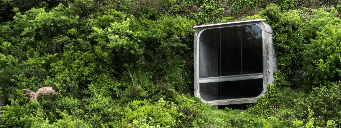 An odd dwelling emerges from thick trees and bushes